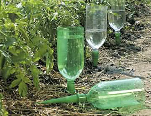 Капельный полив из бутылки своими руками