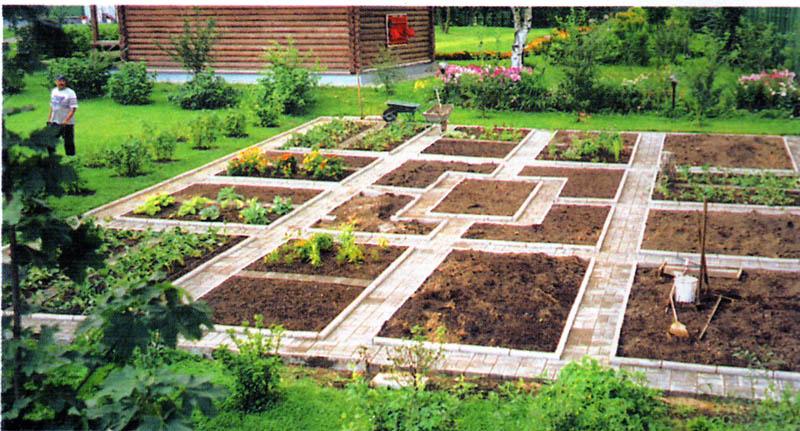 Дизайн в огороде своими руками фото